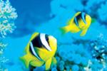 خطرهای ناشی از اسیدی شدن آب اقیانوس ها